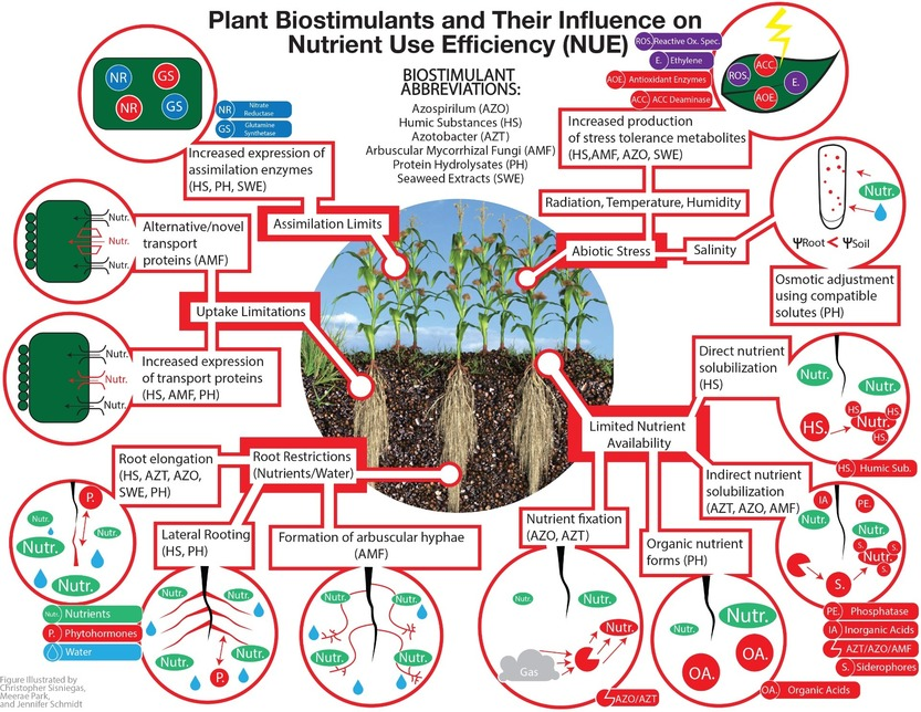 Plant biostimulants and their influence on NUE