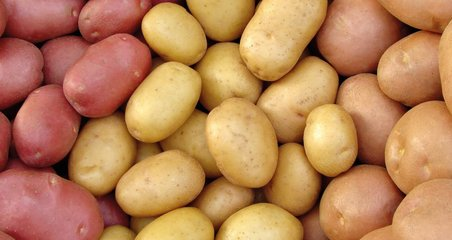 Potatoes, Burleigh, Dodds, publishing, crops, livestock